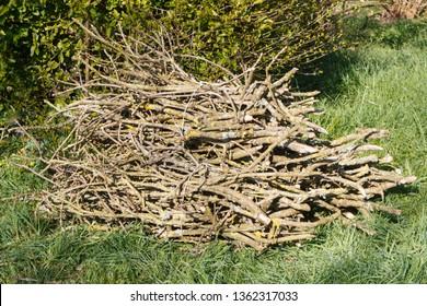 Heap of wood faggots in a garden after trimming a tree