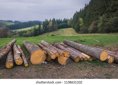 Heap of wood logs in Zlin Region, Czech Republic