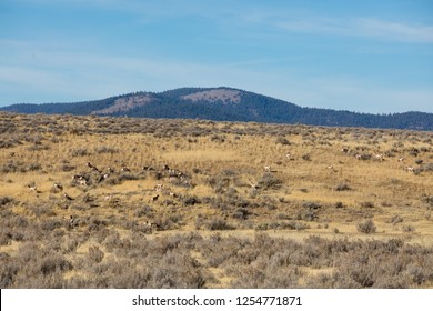 Heard of the rare Pronghorn Antelope in the wild at the California Oregon border in Modoc County. These animals are the second fastest in the world, behind the cheetah.