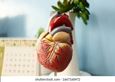 Heart anatomy for cardiovascular health study