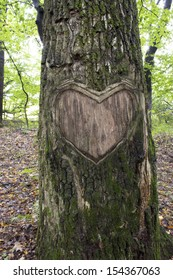 heart in the bark of a tree, Heart wooden cut texture