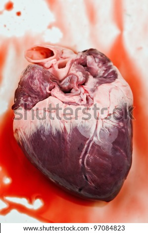 heart with blood close up