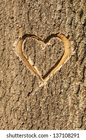 Heart carved in the bark of a tree.