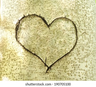 Heart carved in bark of tree. Love story