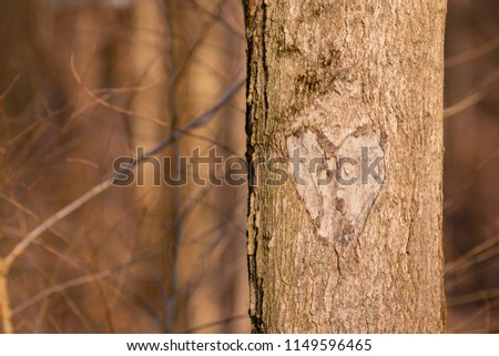 A heart carved into the bark of a tree in the woods. Late fall season.