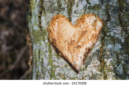 heart carved into a tree