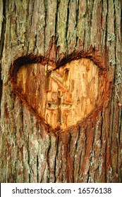Heart carved in a live tree bark