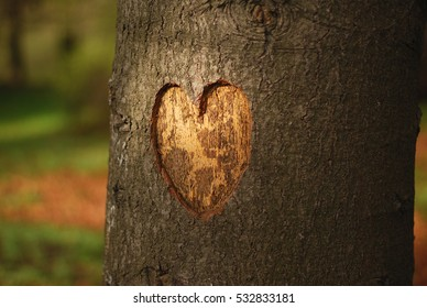 Heart carved on a tree in sunset light