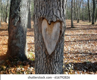heart  carved on tree trunk in autumn woods