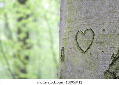heart carved in the tree