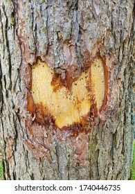 Heart carved in a tree