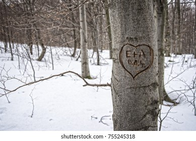 Heart carved in tree in a forest in winter