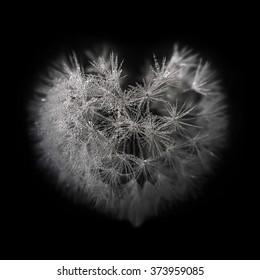Heart from dandelion