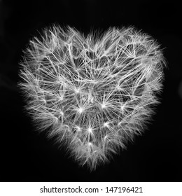 heart of a dandelion, the day of St. Valentine love