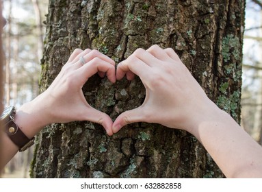 heart from female hands in forest
