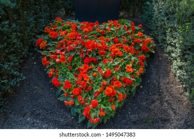 A heart flower pillow from red plants