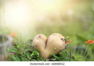 heart flowering