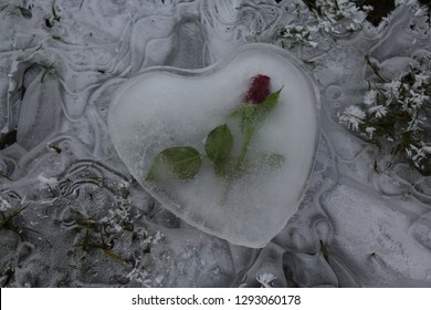 heart of ice with a rose on a frozen puddle