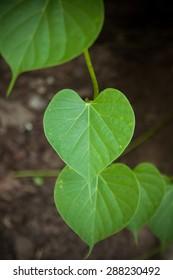 Heart leaf background.