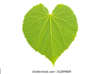 heart leaf shaped on white background