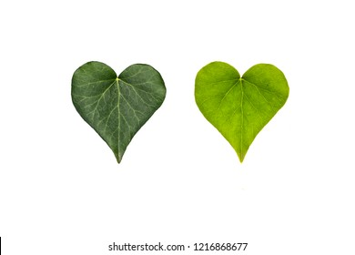 Heart leaves isolated on white background
