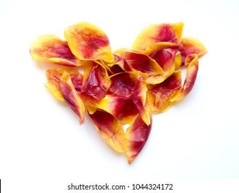 A heart made of tulip petals