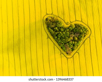 Heart of a nature, aerial view of heart shaped forest among colza field