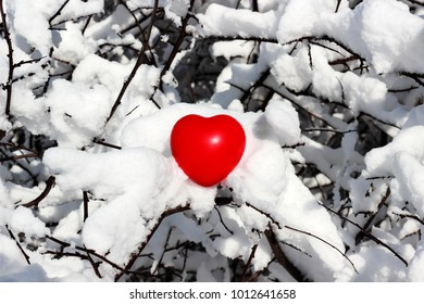 the heart on the branches covered with snow