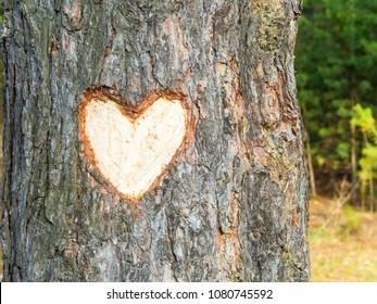 a heart on tree bark in a forest. romantic love nature background