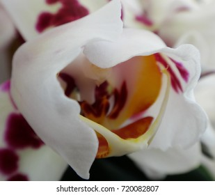 The heart of an orchid