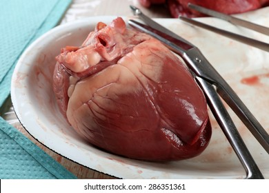 Heart organ in medical metal tray with tools on table, closeup