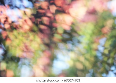 Heart Shape Bokeh Background. (Colourful)