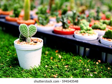 Heart shape cactus and lots of cactus in flowerpot.