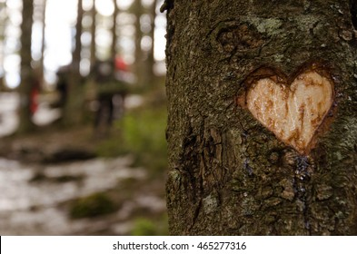 Heart shape carved on tree in the winter