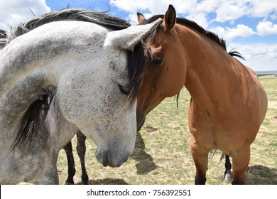 HEART SHAPE FORMED by two horses with their heads together in a meadow in Wyoming