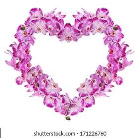 heart shape frame from pink orchid flowers isolated on white background
