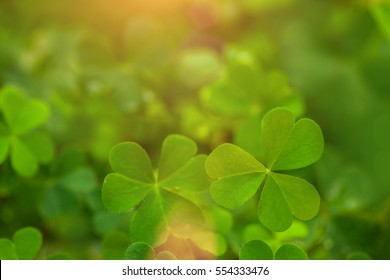 Heart Shape in Green Clover Leaf on Light flare for Love valentine's Day Background