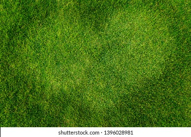 heart shape of green grass texture background