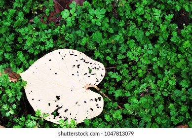 Heart shape leaf on green grass