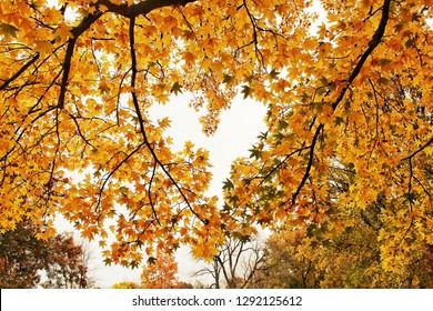 Heart shape in the leaves from last fall. - Shutterstock ID 1292125612