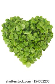 Heart shape made out of  leaves