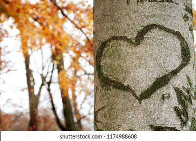 Heart shape marked against tree bark. Unfocused autumnal background. Copy space inside heart