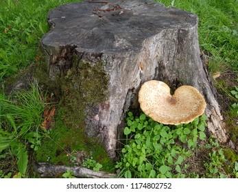 Heart shape mushroom