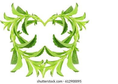 heart shape sugar substitute Stevia plant on white background