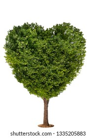 Heart shape tree isolated over a white background.
