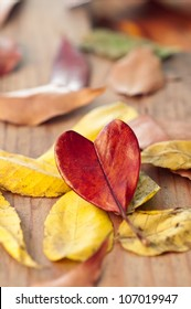 Heart shaped autumn leaf on yellow leaves shallow focus