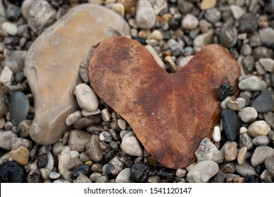 Heart shaped brown leaf, found among the beach stones, in autumn
