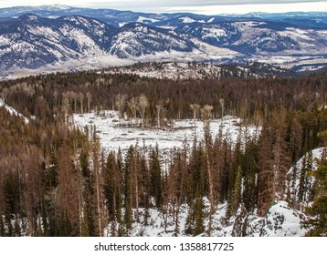 Heart shaped clearing amongst the trees in Vernon BC
