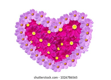 Heart shaped of Cosmos flower isolated on white background. Can used for concepts of love , Valentine 's day , gift card.