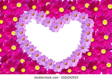 Heart shaped of Cosmos flower on white background. Can used for concepts of love , Valentine 's day , gift card.